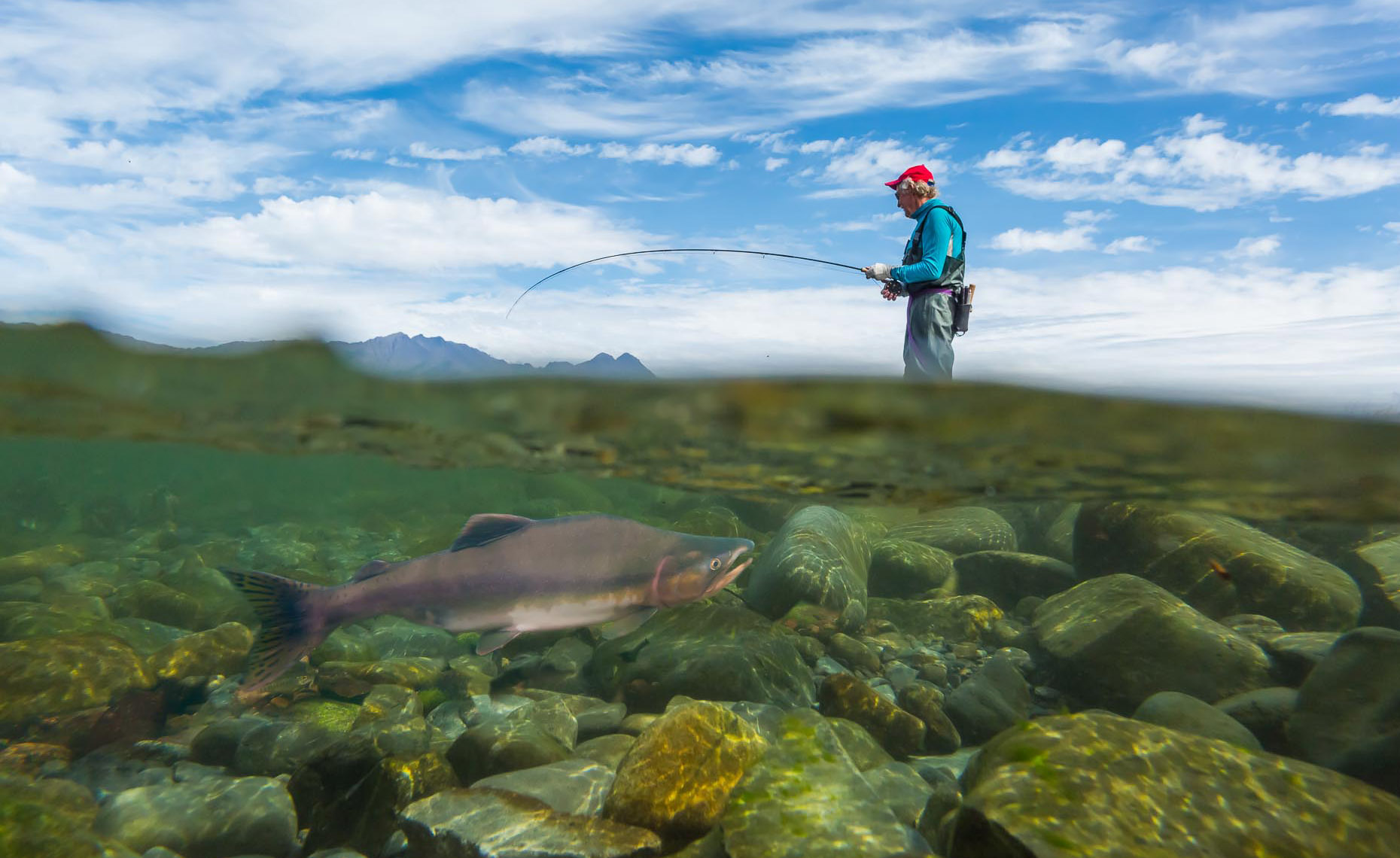 Alaska Photographers Anchorage Tourism Salmon Fishing