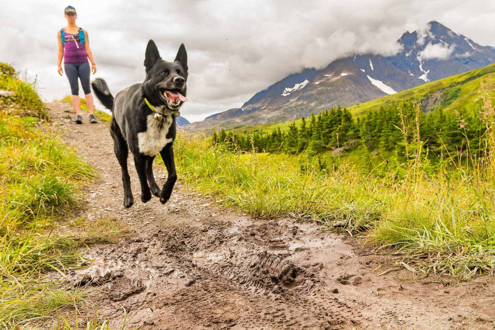 Alaska Seward Hiking Trail with Dog | Michael DeYoung